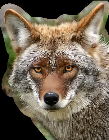 Картинки животных на прозрачном фоне