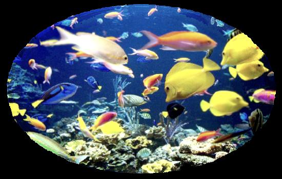 Info Aquarium