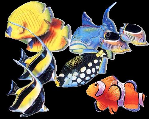 Aquarium Startpagina
