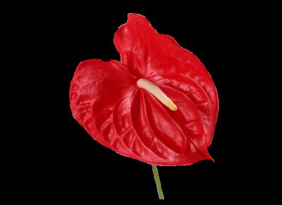 Набор каттеров форма цветка антуриум